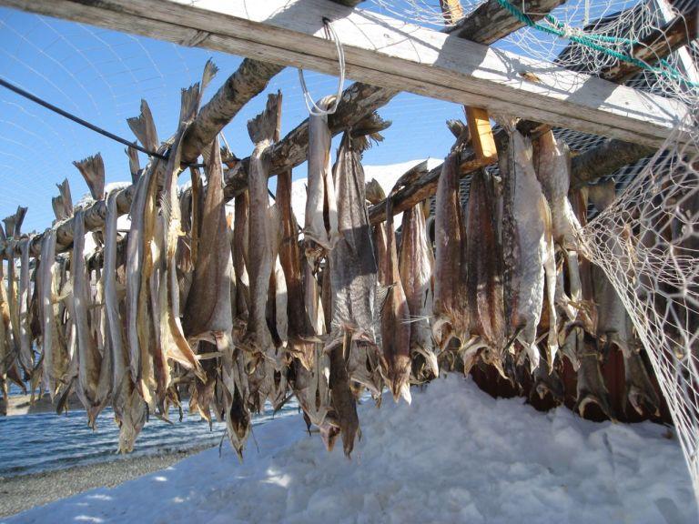 Boknafisken naturtørker og utvikler en fantastisk smak